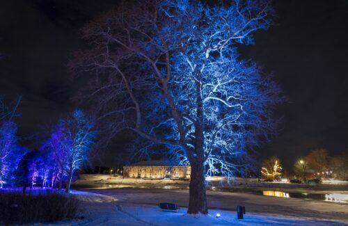 talvinen puu ja Riihisaaren rakennus